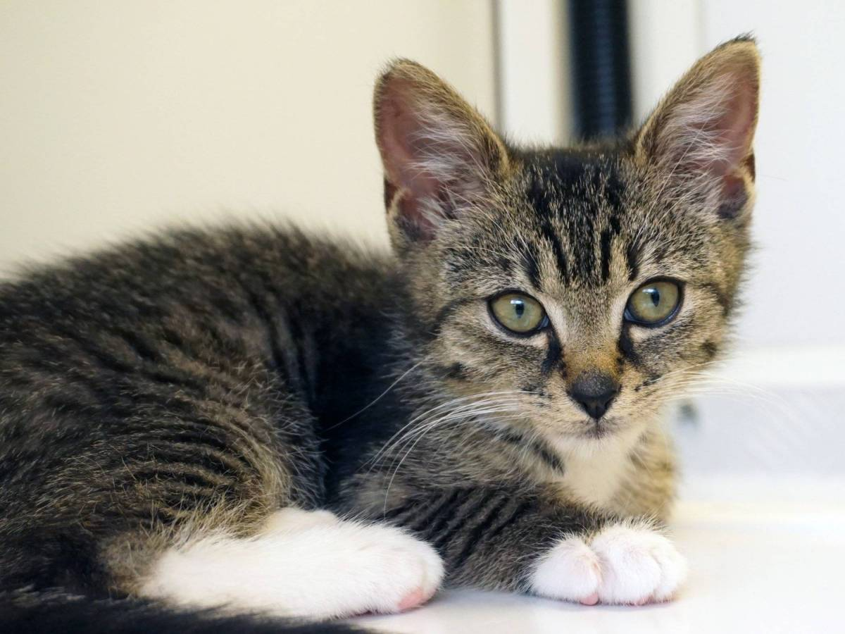 Tiny Kitten Found Abandoned in a Recycling Bin
